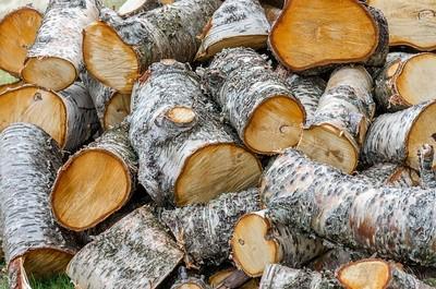 סוגים שונים של עצי הסקה